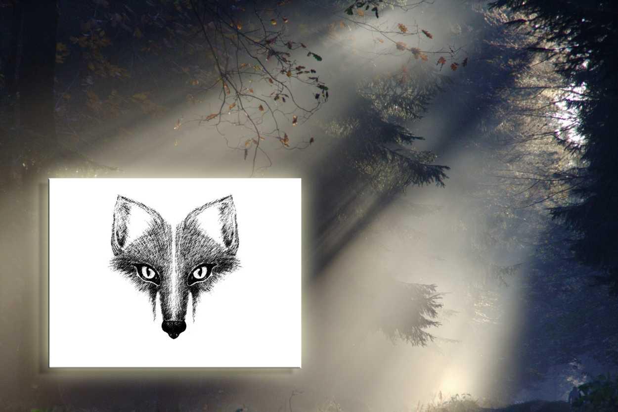 plakat foxy do druku